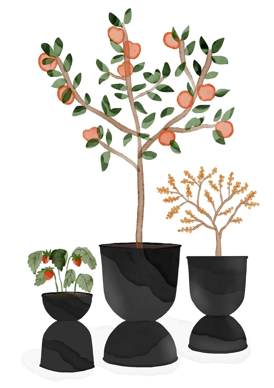 Outdoor Plant Guide, ferm LIVING, Himbeer, Apfelbbäumchen, Sanddornstrauch