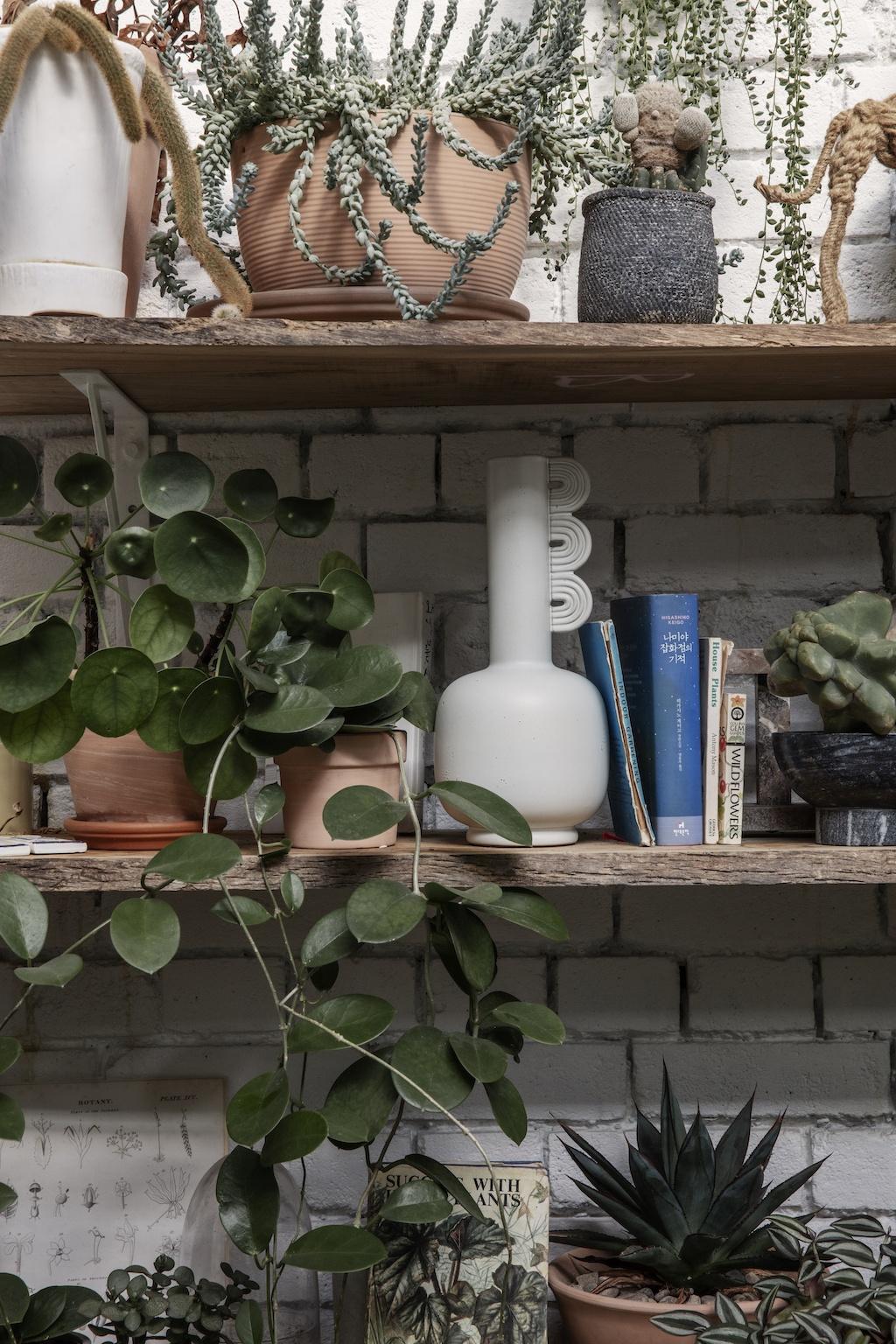 Zimmerpflanzen auf rustikalen Wandregalbrettern