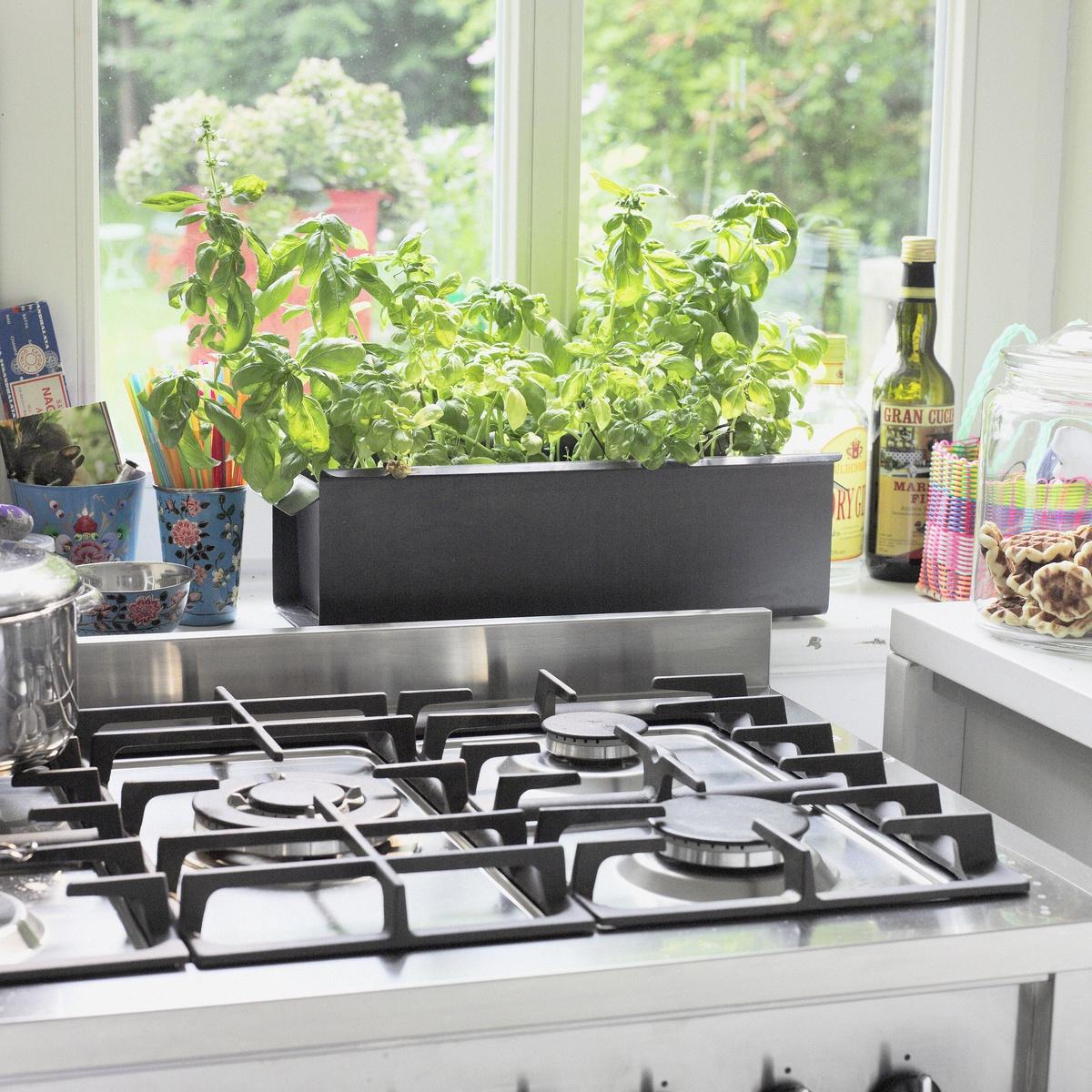 Minigewächshaus und Co.: Gärtnern im Kleinen