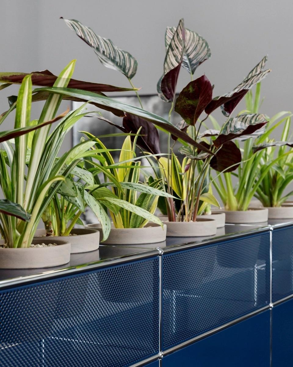 USM Pflanzenwelten - neue Möbel mit grünem Daumen